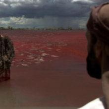 Кровь на Ниле